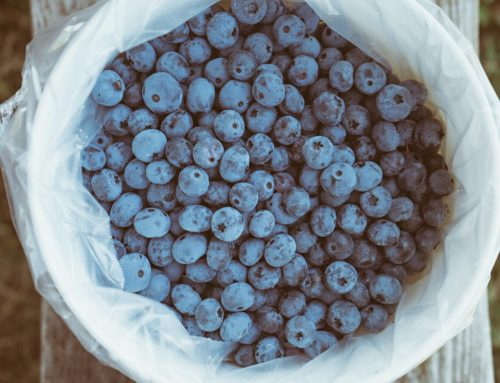 7 Healthy Foods You Should Be Eating